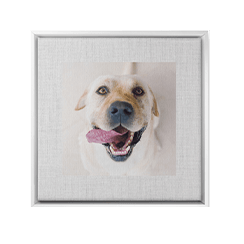 Full white framed photo with one photo of dog used as wall art
